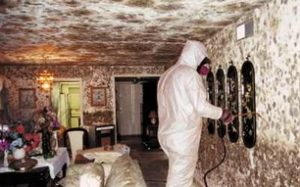 Preventing Mold & Mildew from Damaging Your Home