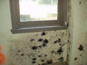 San Diego indoor mold