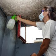Mold Health Issues and Home Structural Dangers